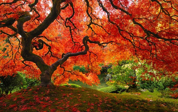 arbres6
