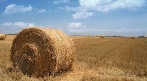 blé 2