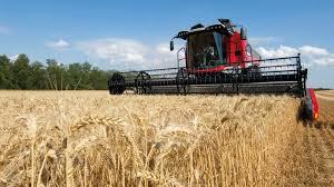 blé 5