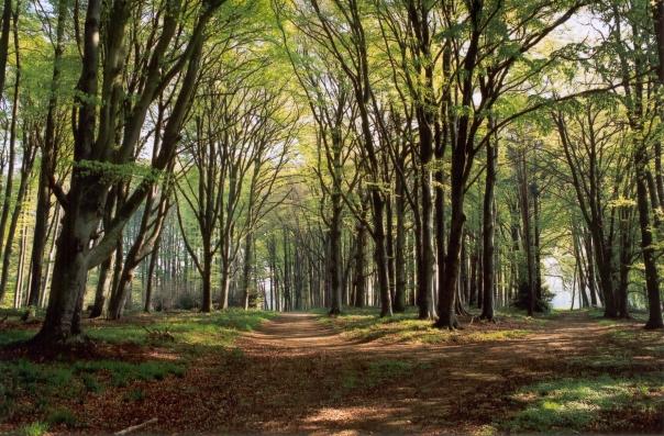 sous-les-arbres-4