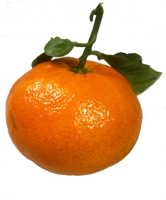 mandarine-mandarine-9462891-583-700