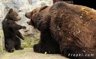 bébé ours 1