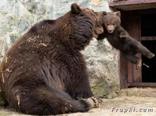 bébé ours 2