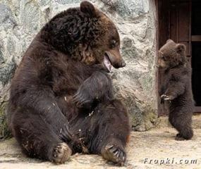 bébé ours 3