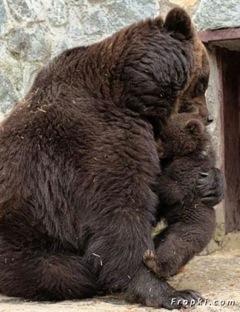 bébé ours 4