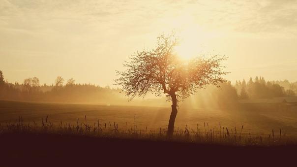 sunrise-1409090_960_720