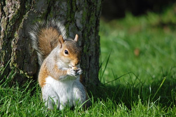 squirrel-1612021_1280