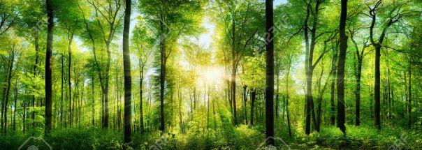 39809307-panorama-d-une-for-t-pittoresque-d-arbres-feuillus-verts-frais-avec-le-soleil-jetant-ses-rayons-de-l-banque-dimages