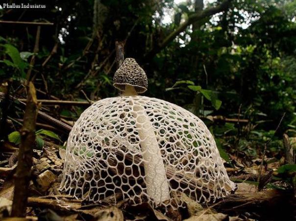 champignons-15