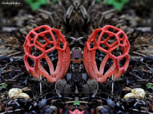 champignons-16