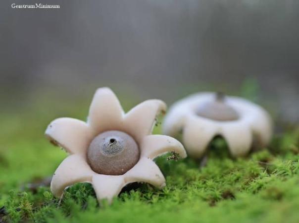 champignons-21