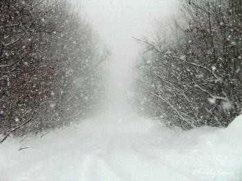 tempete-neige-350x262