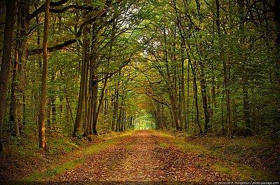 thumb_automne-chemin-foret-dourdan-01