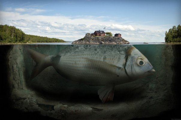 10122249-ile-du-poisson