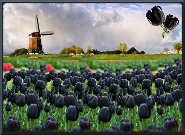 atelier-14-la-tulipe-noire
