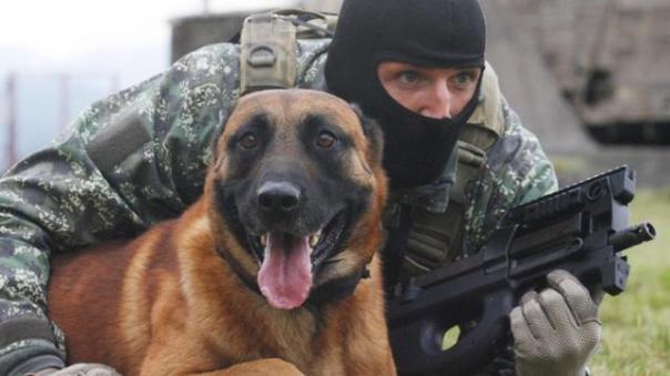 les-chiens-fideles-allies-des-forces-speciales