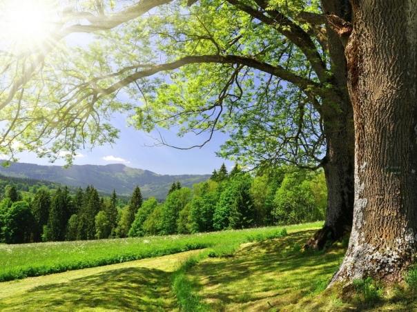 trees-spring-sun-kroner-branches-light-greens
