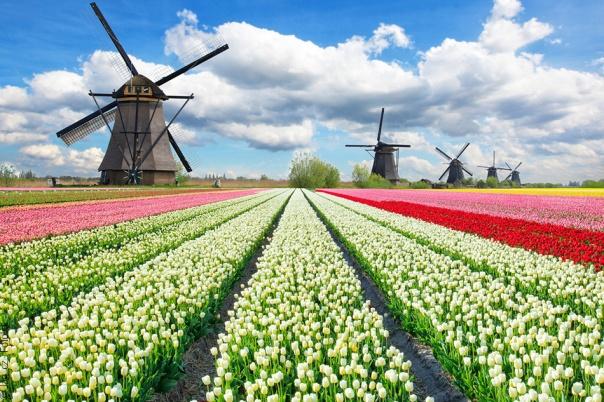 fb-hollande-we-1482122