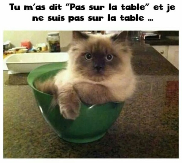 ob_5335d4_chat-humour-5