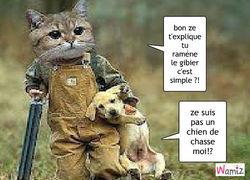 z-aime-pas-la-chasse-520611
