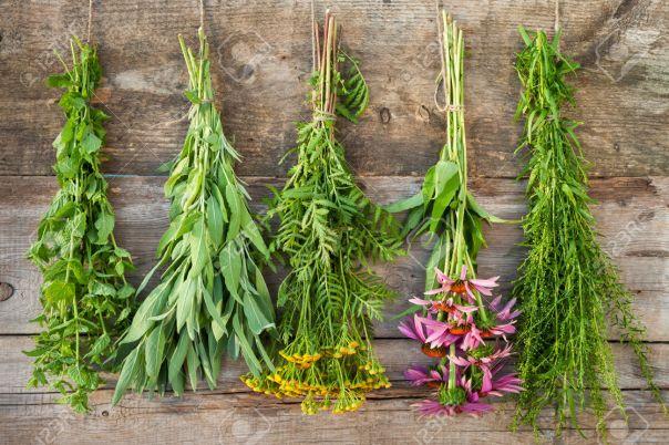 30527733-des-bouquets-de-plantes-m-dicinales-sur-le-mur-en-bois-de-la-m-decine-base-de-plantes-banque-dimages