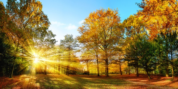 seasons_autumn_trees_500706