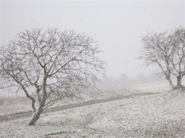 2013-02-1425-neige-noyer