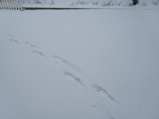 24.02.2013 dernière neige 005