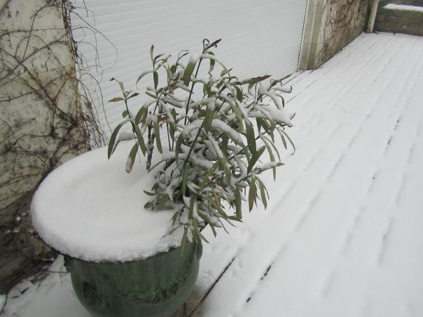 24.02.2013 dernière neige 008