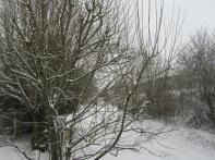 24.02.2013 dernière neige 011