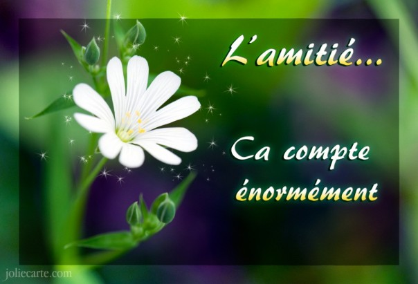l-amitie-ca-compte