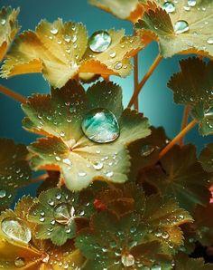 84f356292102321699905ec31e13313e-rain-drops-dew-drops