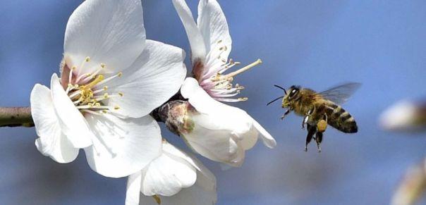 cover-r4x3w1000-57e167d1cfbb3-comment-les-abeilles-captent-les-champs-electriques