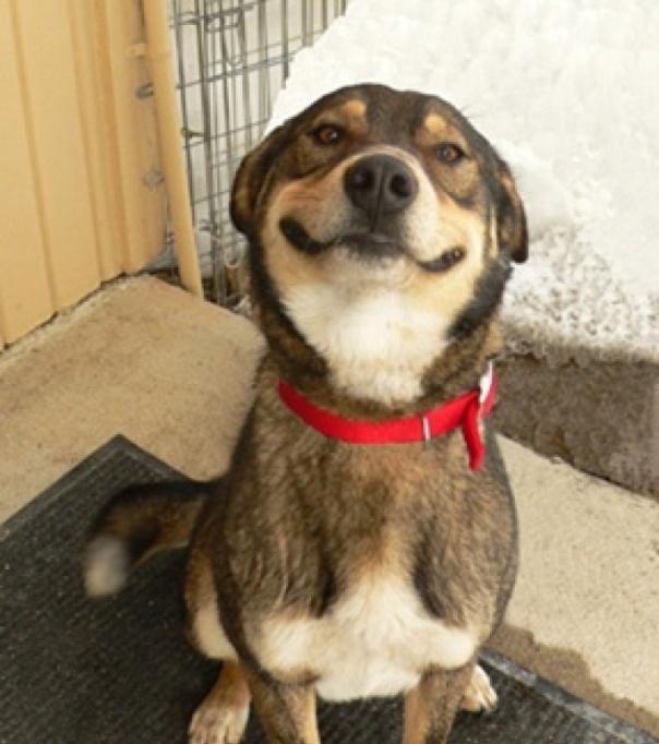 un-chien-qui-sourit_180726_wide