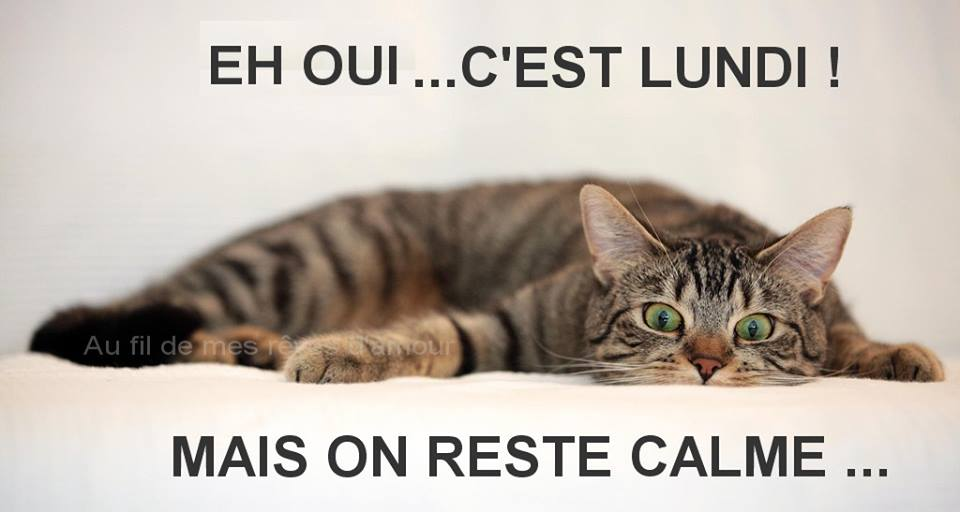"""Résultat de recherche d'images pour """"on est lundi"""""""