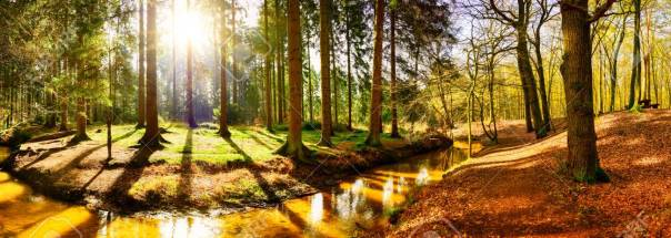 Beautiful autumn forest with stream and bright sun shining throu